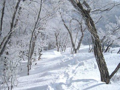 明るい登山道