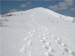 粟柄越付近からの赤坂山