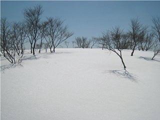 赤坂山と三国山の間の雪原