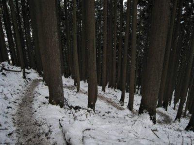 坊村からの樹林帯