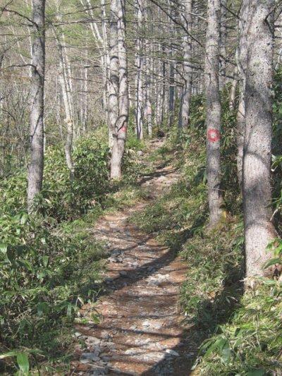 蝶ヶ岳登山道