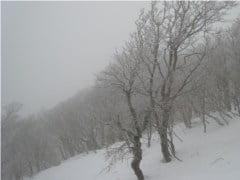 大普賢岳山頂の木々
