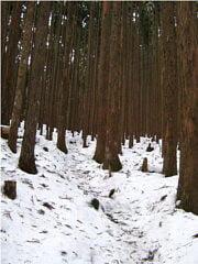 稲村ヶ岳登山道