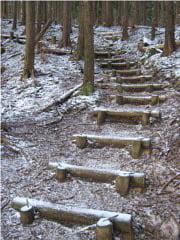 登り尾ルート登山道