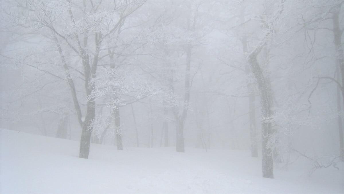 冬の明神平
