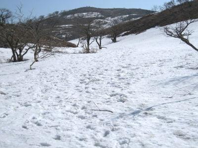 霊仙山雪原