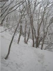 高見山山頂から大峠へ続く登山道