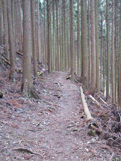 綿向山登山道