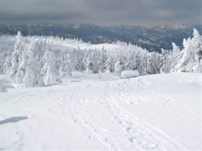 樹氷原地帯